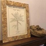 Planche botanique BANANIER 2