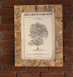 Botanical board EUCALYPTUS